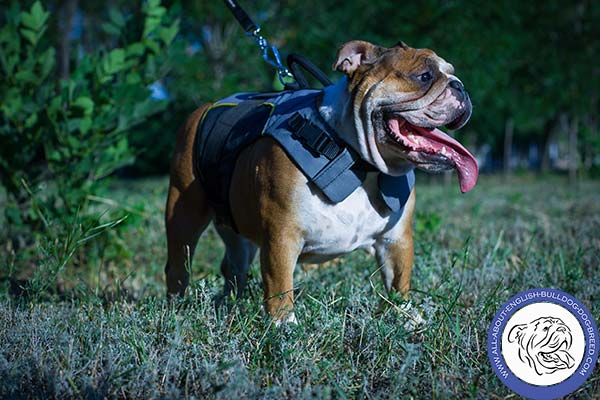 Universal Nylon Harness for English Bulldog