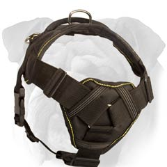 English Bulldog Harness with Soft Chest Plate