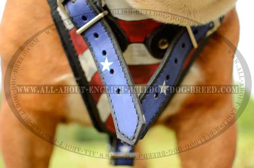 Painted Chest Plate on English Bulldog Harness Training Supply