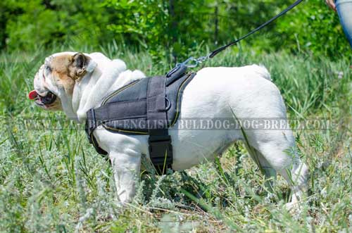 Nylon English Bulldog Harness with Quick Release Buckle