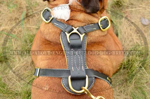 Stitched Back Plate of Leather English Bulldog Harness