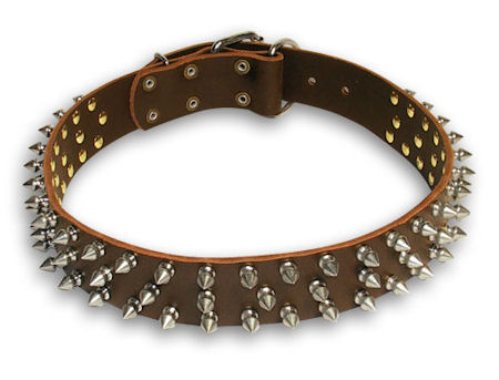 Spiked Brown collar 27'' for English Bulldog /27 inch dog collar
