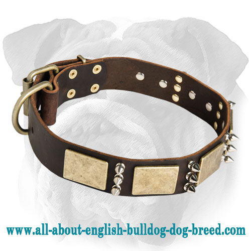 Gorgeous War Leather Dog Collar - Massive Brass Plates+3 Spikes