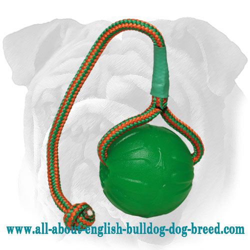 Water Floating Rubber English Bulldog Toy