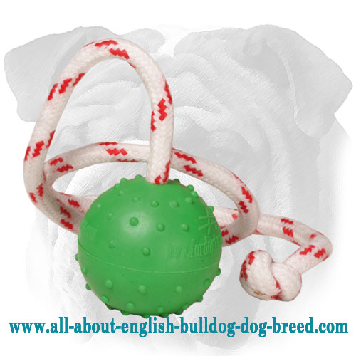 Floating Rubber English Bulldog Toy for Encouraging Positive Play - Small