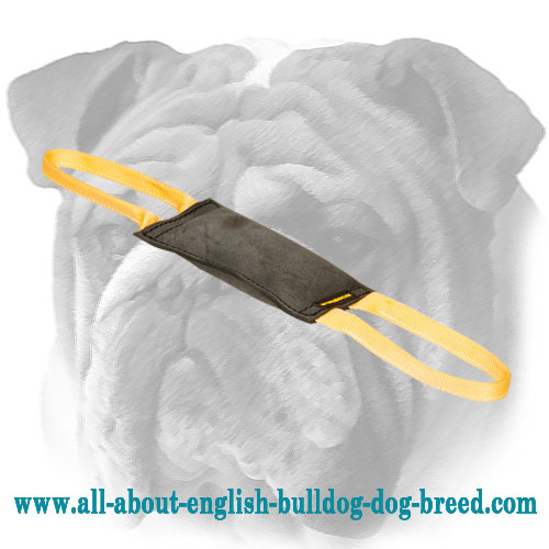 Solid Leather Bite Tug for English Bulldog
