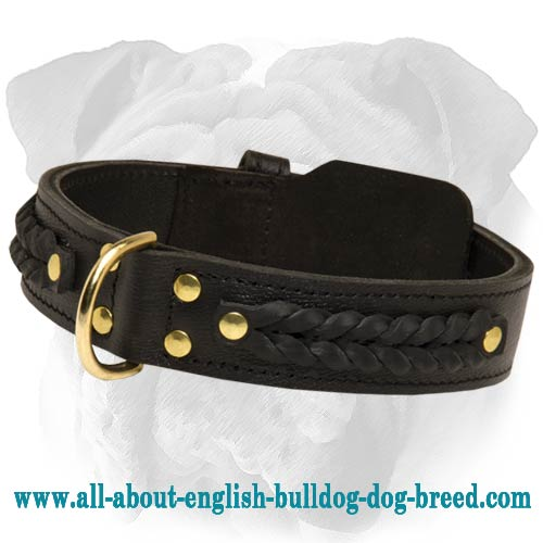 Durable 2 Ply Leather English Bulldog Collar with Brades