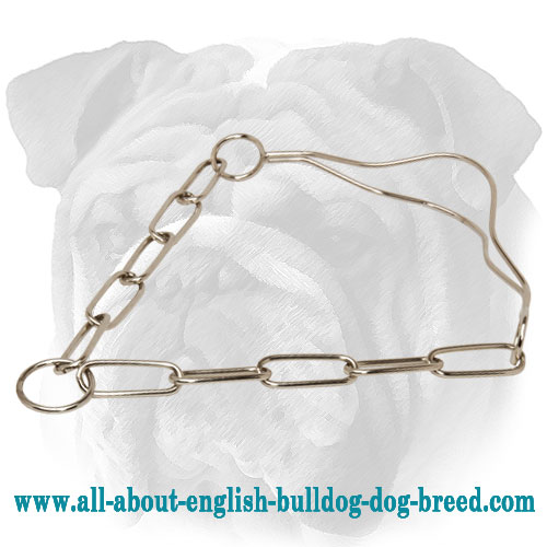 """As Noble as a Lion"" Chrome Plated English Bulldog Dog Show Collar"