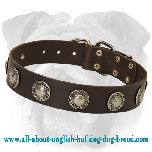 Deluxe Leather Dog Collar for English Bulldog