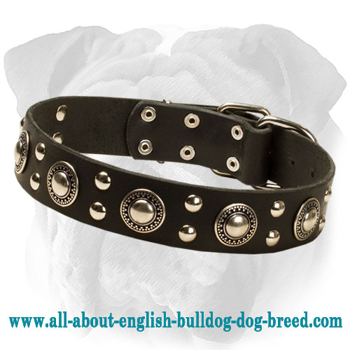 """Endless Admiration"" English Bulldog Collar with Nickel Conchos and Studs"