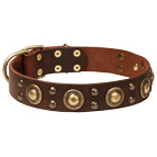 """Golden Knight"" Genuine Leather Collar for English Bulldog Breed"
