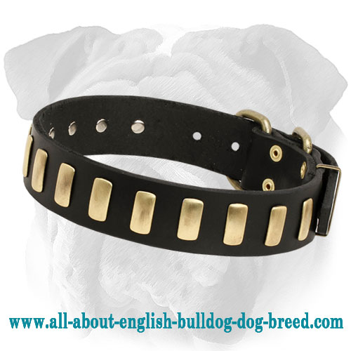 Deluxe Leather English Bulldog Collar with Brass Plates