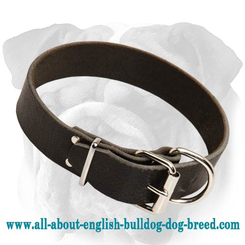 Classic Design Leather English Bulldog Collar with Traditional Buckle