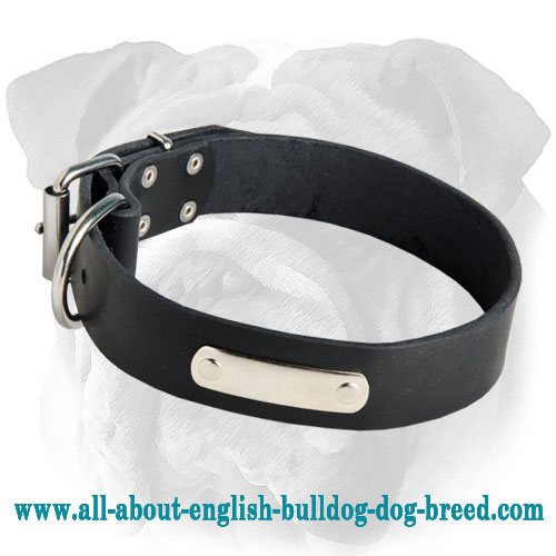 Leather Dog Collar for English Bulldog with Free ID Tag