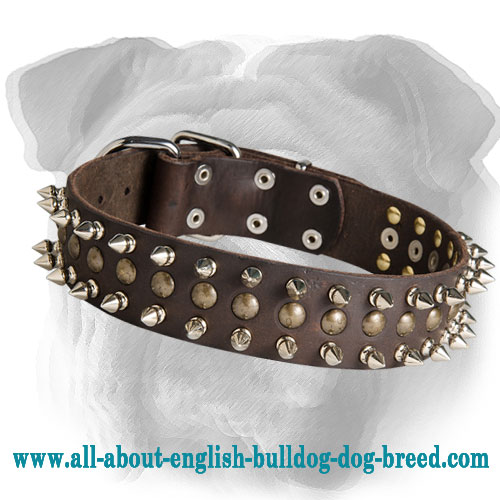 Marvelous Leather English Bulldog Collar with Brass Studs ans Nickel Spikes