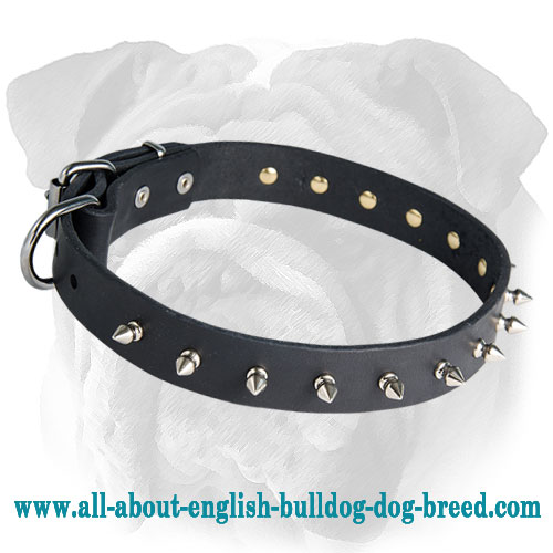 Fantastic English Bulldog Collar for Walking - Spiked Leather Accessory