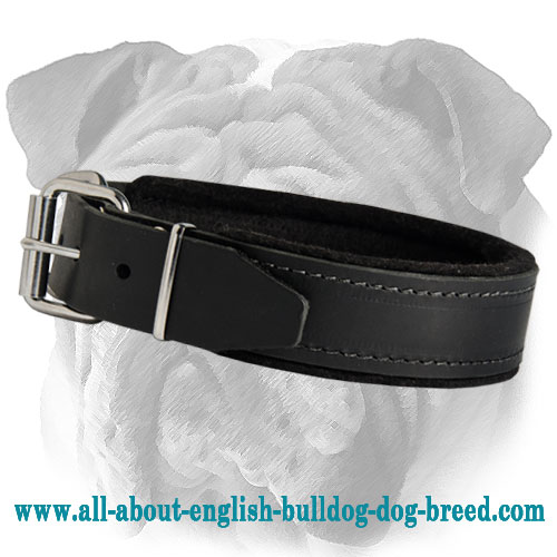 Custom Leather English Bulldog Collar with Soft Stitched Padding