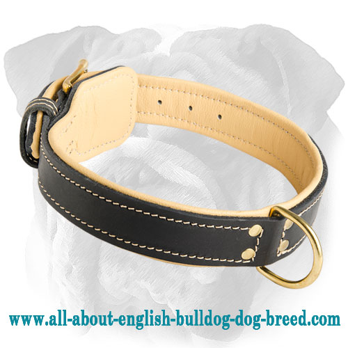 Utmost Comfort Leather English Bulldog Collar with Padding