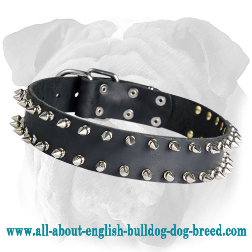 Double Row Spiked Leather Collar for English Bulldog