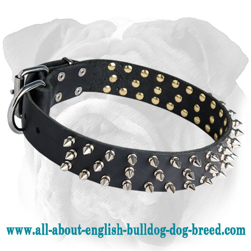 Glamurous Leather Spiked English Bulldog Collar for Walking