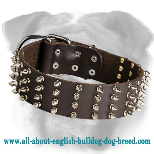 2 Inch Wide Leather Spiked Dog Collar for English Bulldog