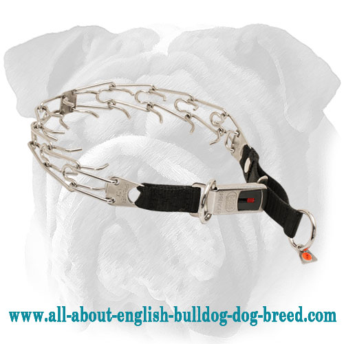Stainless Steel English Bulldog Pinch Collar with Nylon Loop and Click Lock Buckle - 1/8 inch (3.2 mm)