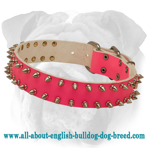 Top Quality Pink English Bulldog Collar with 2 Rows of Spikes