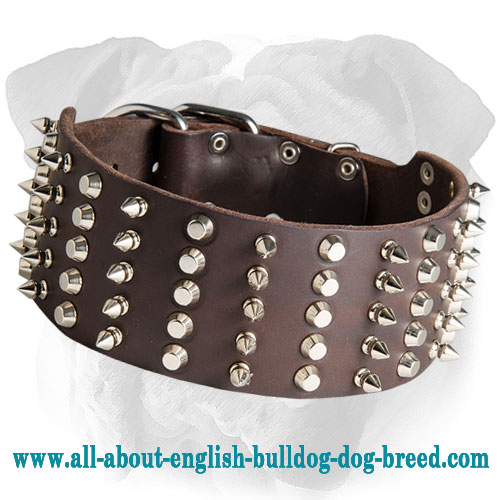 Wonderful Leather Collar for English Bulldog