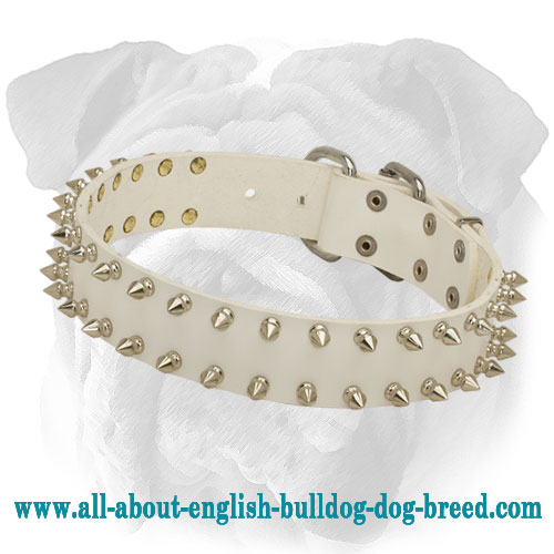 Marvelous White Leather Collar for English Bulldog Breed
