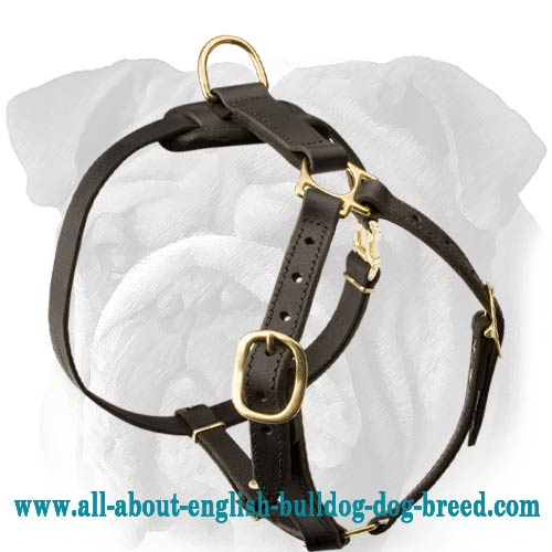 Premium Quality Lightweight Leather English Bulldog Harness