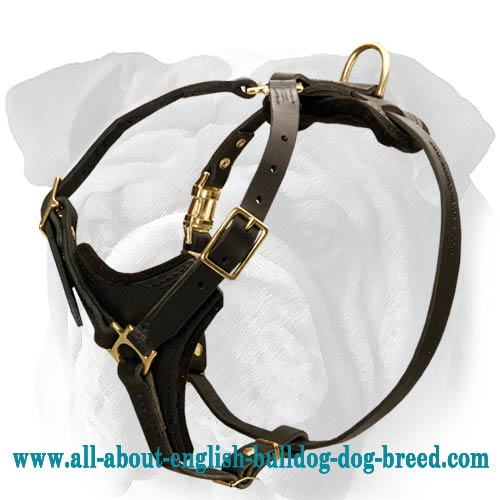 Easy Adjustable Harness for English Bulldog