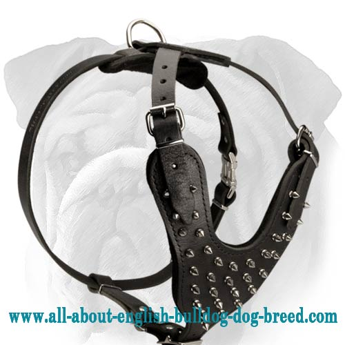 Spiked 2-Ply Latigo Harness for English Bulldog