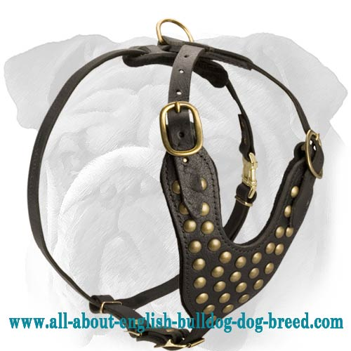 Marvelous Y-Shaped Leather English Bulldog Harness with Studs