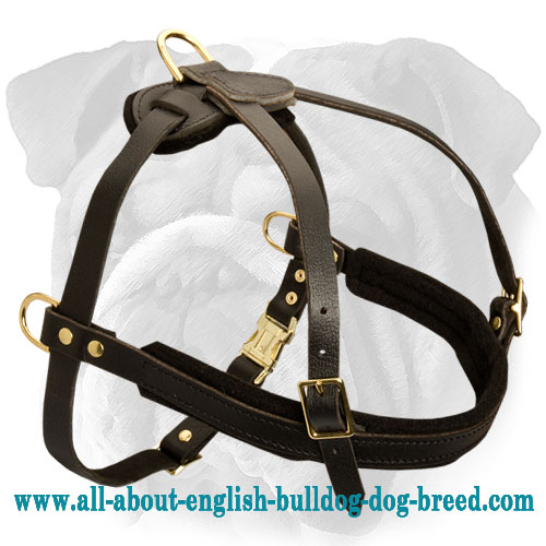 Durable Padded Tracking Harness for English Bulldog