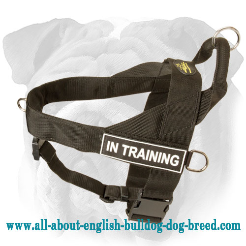 Nylon Harness for English Bulldog Breed with ID Patches