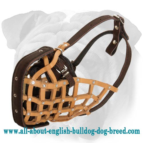 Professional Training English Bulldog Basket Muzzle of Genuine Leather