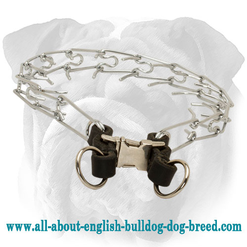 """Toothy Teacher"" Chrome Plated English Bulldog Pinch Collar with Leather Part - 1/8 inch (3.25 mm)"