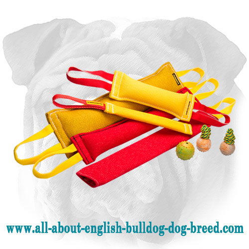 Buy 5 Professional English Bulldog Bite Items - Get 8 Tools