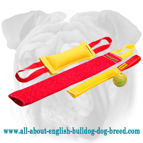 Pay for Three - Get Four Items for English Bulldog Puppy Training