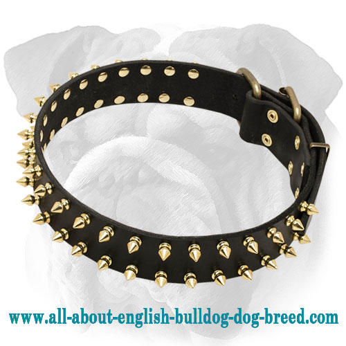 Fashionable Spiked Leather Dog Collar for English Bulldog