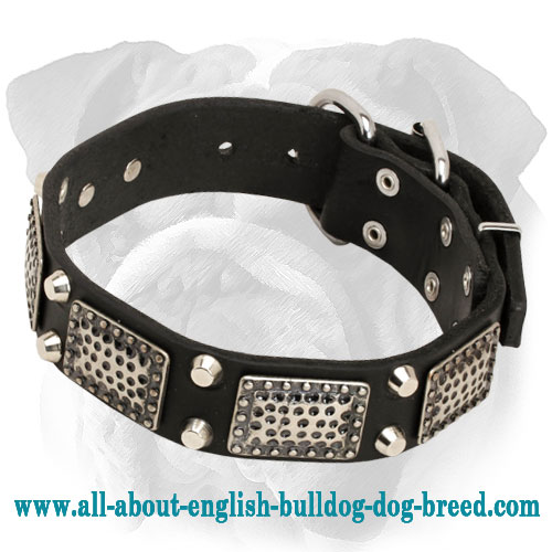 Leather English Bulldog Collar with Vintage Plates and Cones