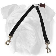 English Bulldog coupler leash for walking two dogs