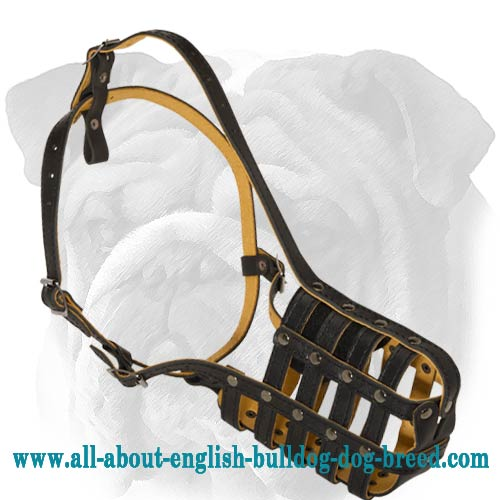 Cage Leather Muzzle for English Bulldog
