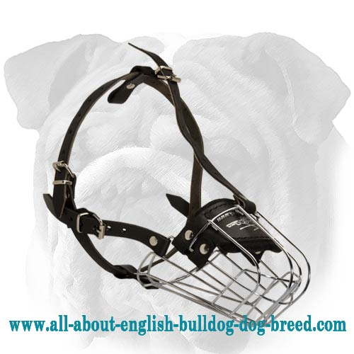 Metal Cage English Bulldog Muzzle with Secure Fixation