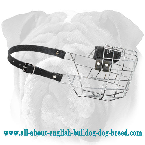 Large Wire Cage English Bulldog Muzzle