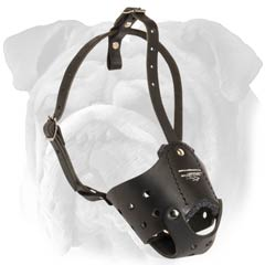 Leather padded muzzle for English Bulldog