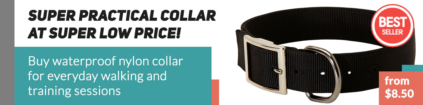 Durable Nylon Dog Collar for English Bulldog